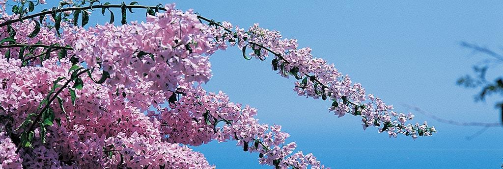 offre spécial éveil printemps hôtel à eze